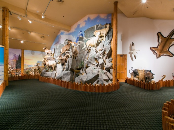 Wildlife Museum in Zion
